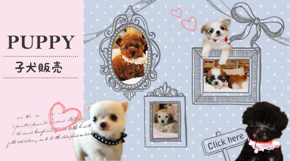 PUPPY 子犬販売